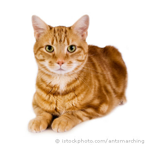 ginger-cat-300x300[1]