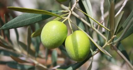 olives-473793_1280