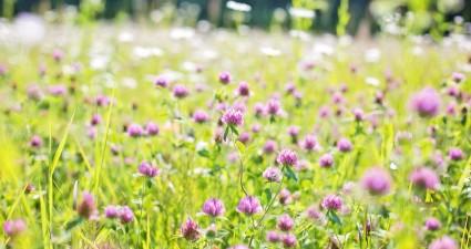 wildflowers-817179_1280