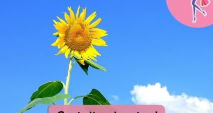 Catchy freebie template sunflower