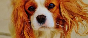 Catchy freebie template cute dog