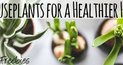 houseplants for a healthy home catchyfreebies