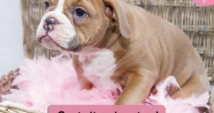 free diagel sample for dog cat bowel health pet samples catchyfreebies