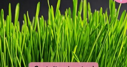 Catchy freebie template grass