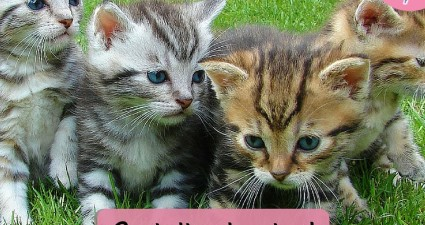Catchy freebie template kittens