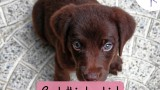Catchy freebie template brown dog