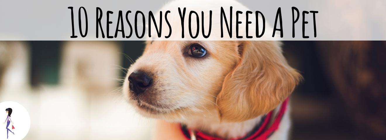 10 Reasons You Need a Pet